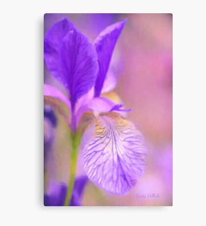 Iris in Pastel Canvas Print