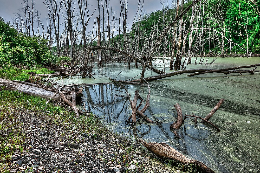 The Swamp by Kaos  Photography