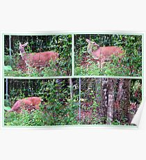 Doe and Fawn in Dunnellon Poster