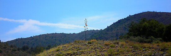 STATE HIGHWAY 87 SCENIC ROUTE ARIZONA JULY 2006 by photographized