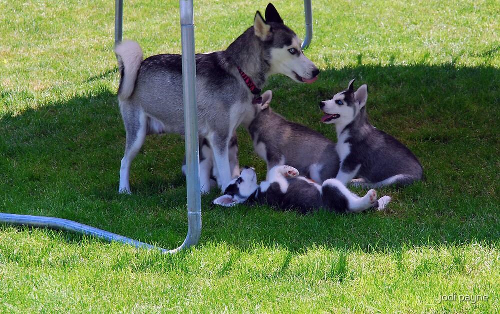 Zeka & Her Babies by jodi payne