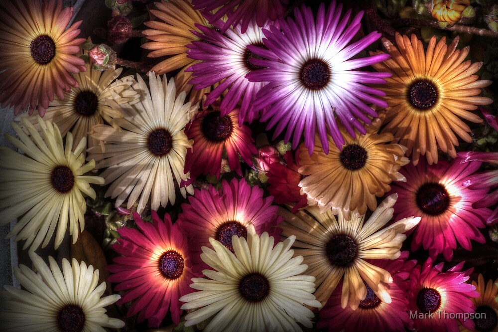 Flowers by Mark Thompson