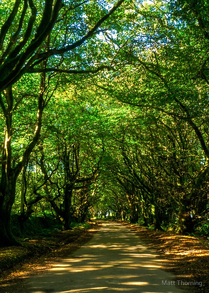 Peaceful Road by Matt Thorning