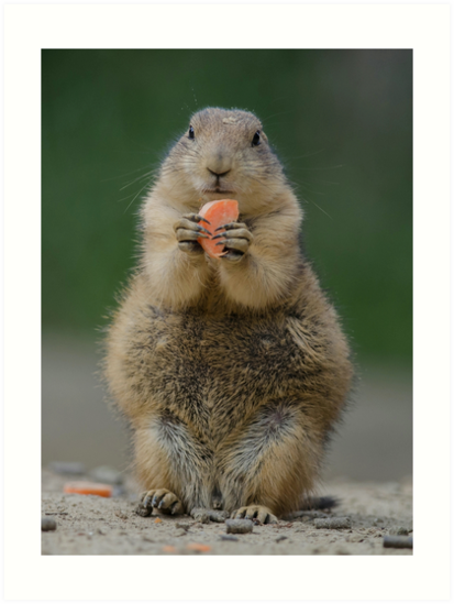 Prairie dog by Peter Wiggerman
