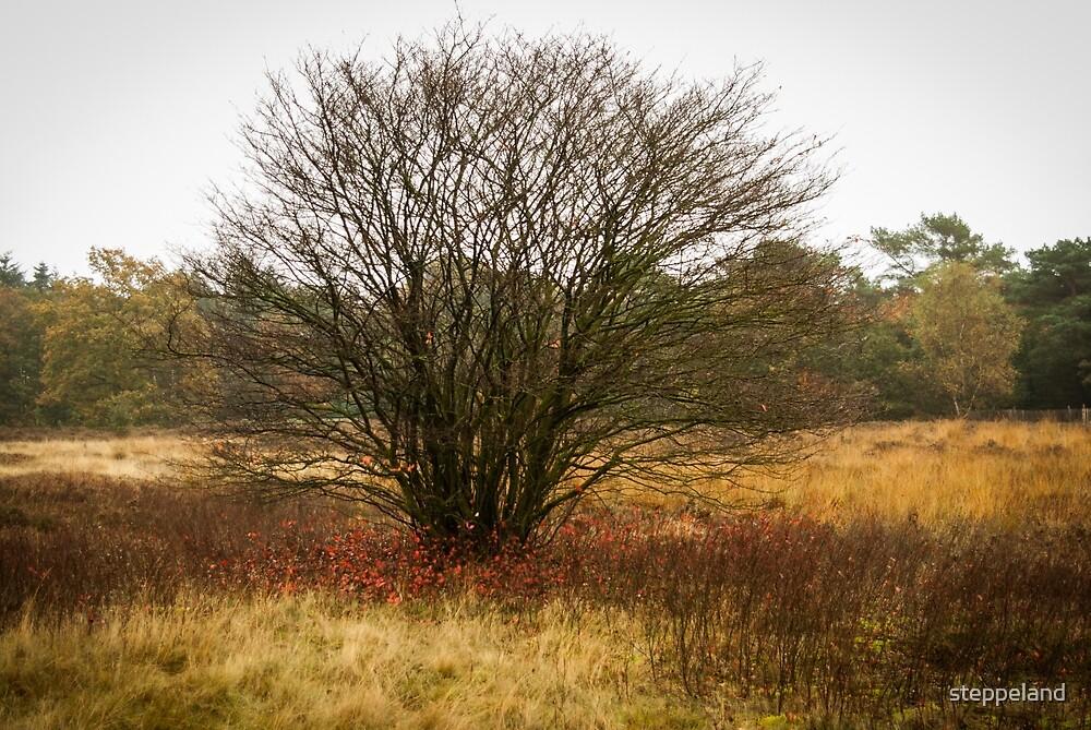 Heathland autumn symphony by steppeland