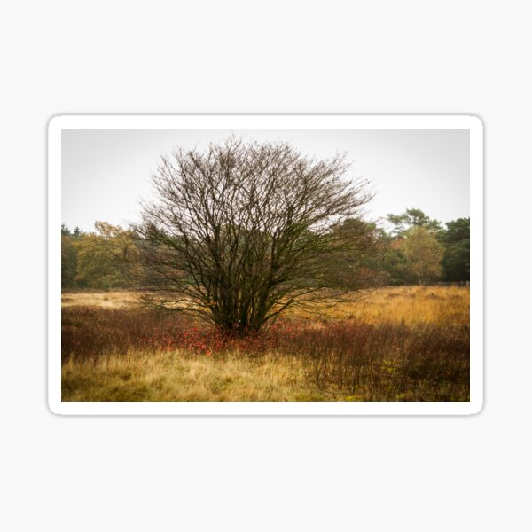 Heathland autumn symphony Sticker