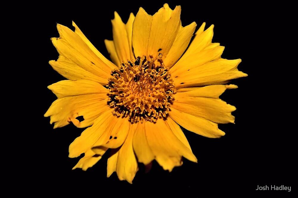 The Yellow Flower by Josh Hadley