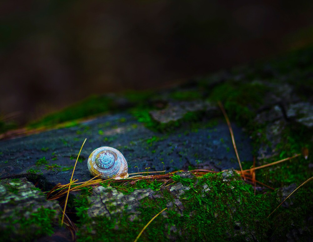Woodland Snail by Nazareth