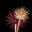 Palm Tree Fireworks by johntbell