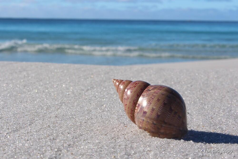 Shell on Beach The Gardens East Coast Tasmania by fantasytripp