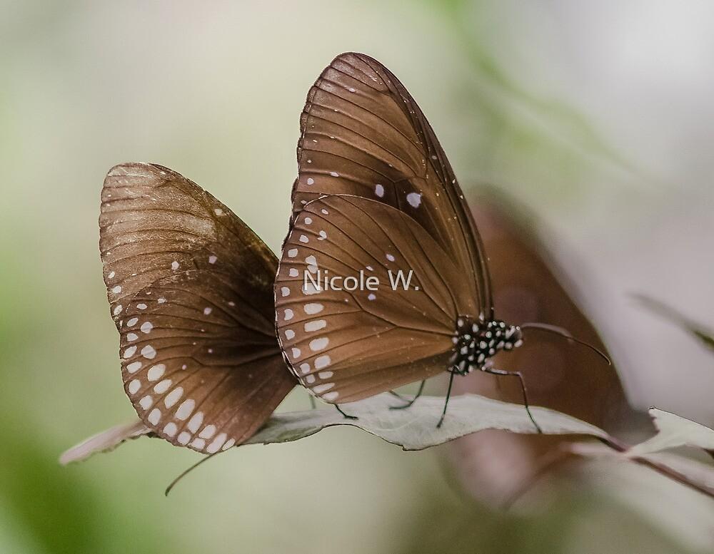 butterflies by Nicole W.