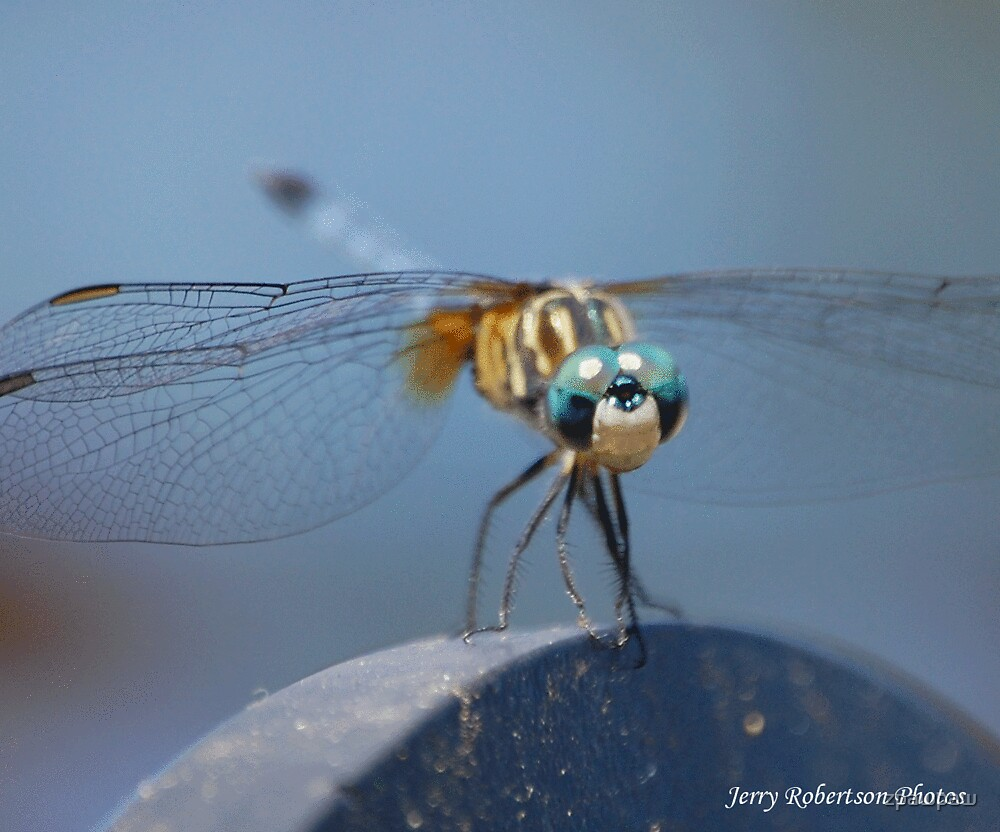 Dragonfly..... by zpawpaw