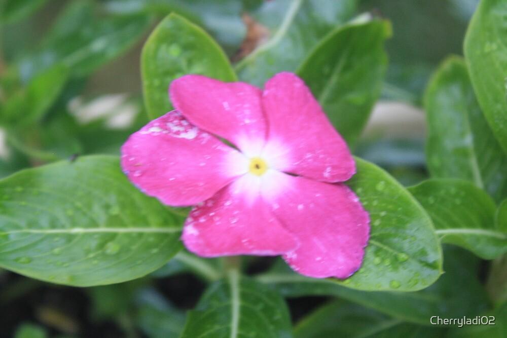 Pink flower by Cherryladi02