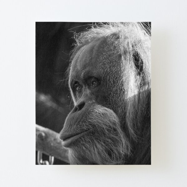 Orangutan Canvas Mounted Print