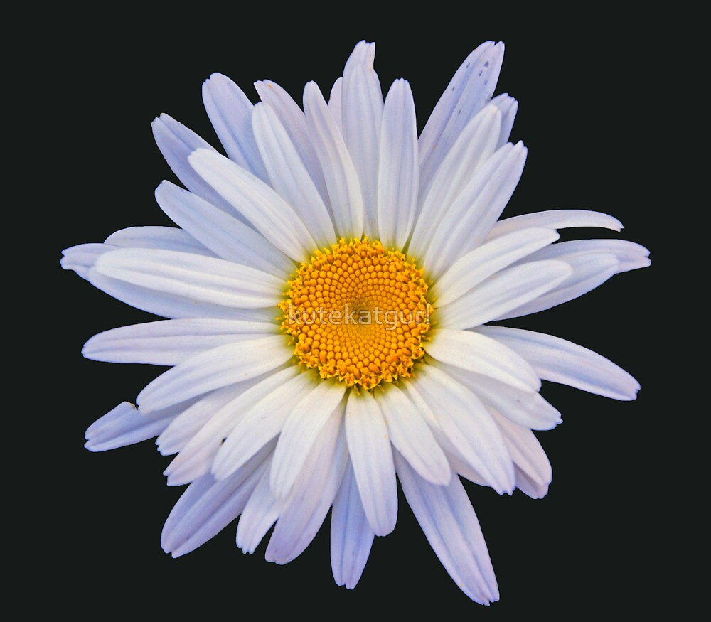 Dreamy daisy by kutekatgurl