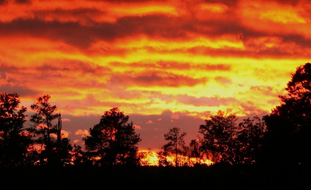 Flaming Sunset by Karen Harrison