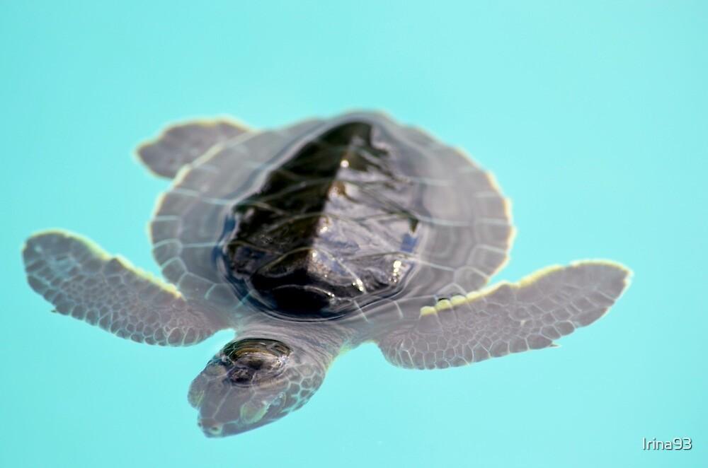 baby sea turtle by Irina93
