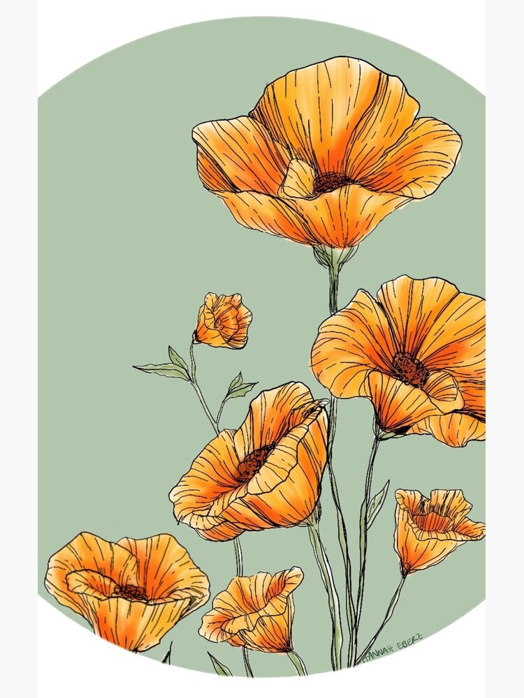 California Poppies by hannaheberz