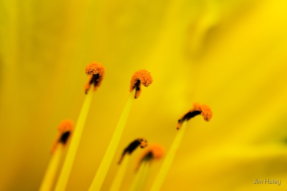 Golden Yellow by Jim Haley