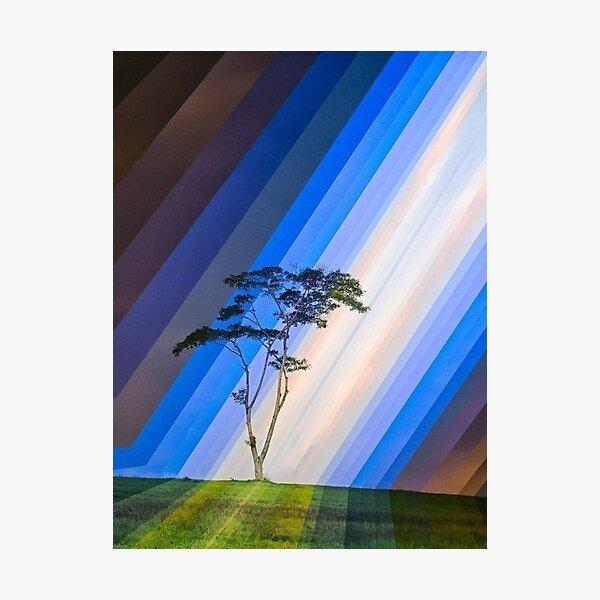 Tree Design With Daylight Photographic Print