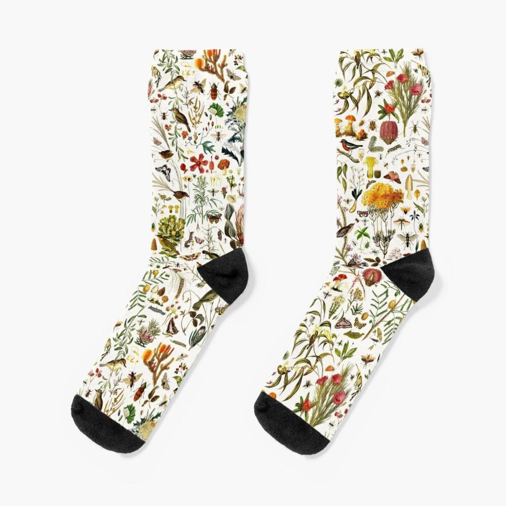 Biology Australia. Socks