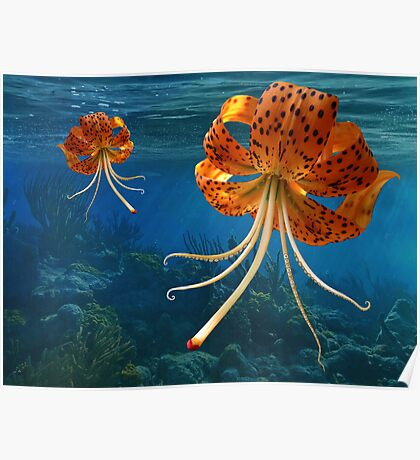 Octo-Flower Jelly-Pus Poster