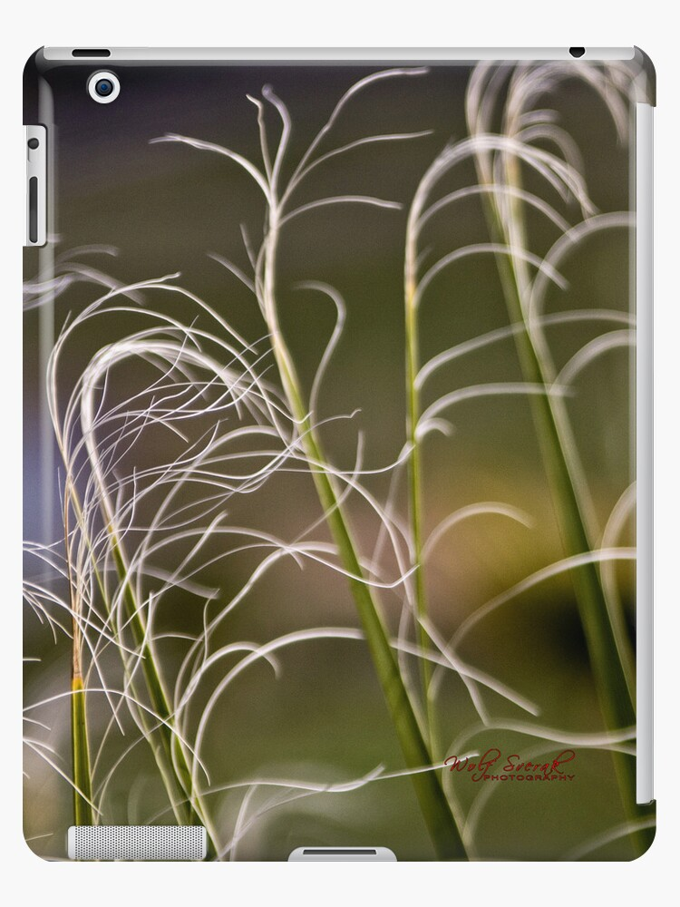 Palm tree fronds for your iPad by Wolf Sverak