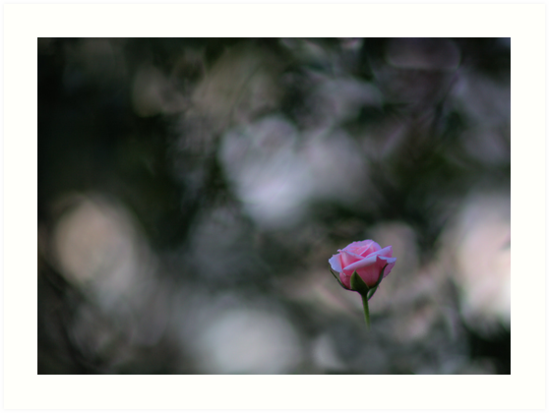 Bokeh at it's best...or worst by Martha Burns