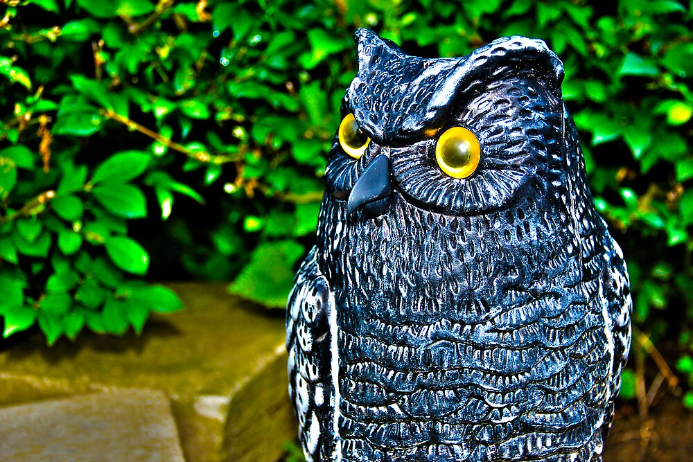 I Just Don't Give A Hoot by David Misko
