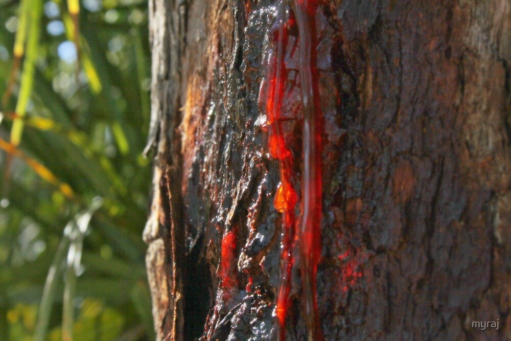 Flowing Red Sap by myraj