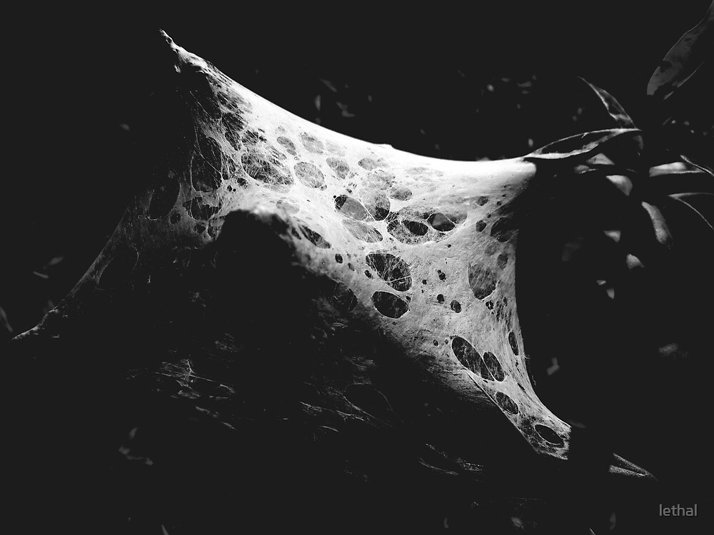 spider's web by lethal
