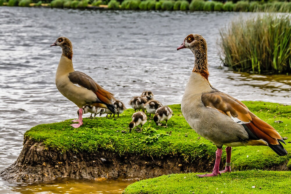 Family Time by mjamil81