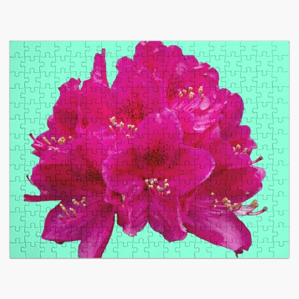 Rhododendron on an aqua menthe background Jigsaw Puzzle
