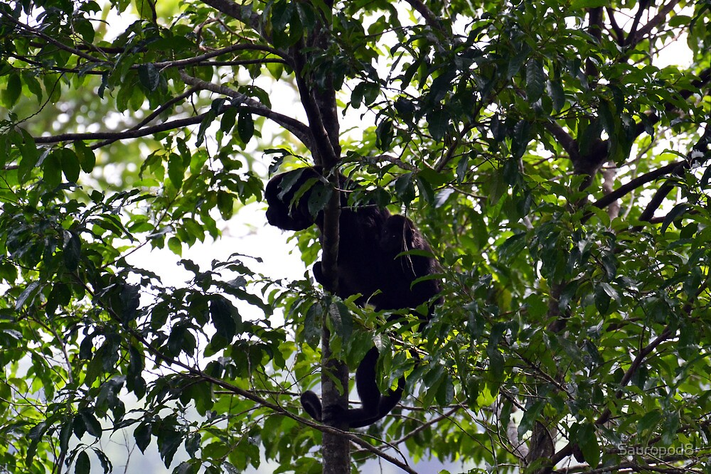 Mantled Howler Monkey With Baby by Sauropod8