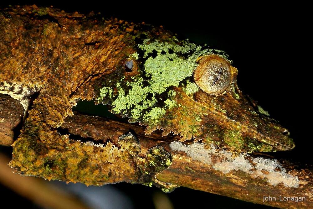 Detail of Leaf tailed Gecko ( Uroplatus Henkeli ) Antasibe Madagascar by john  Lenagan