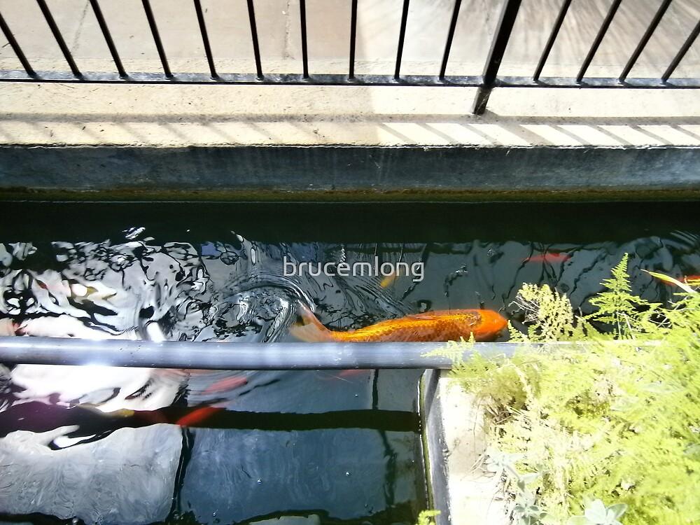 large goldfish by brucemlong