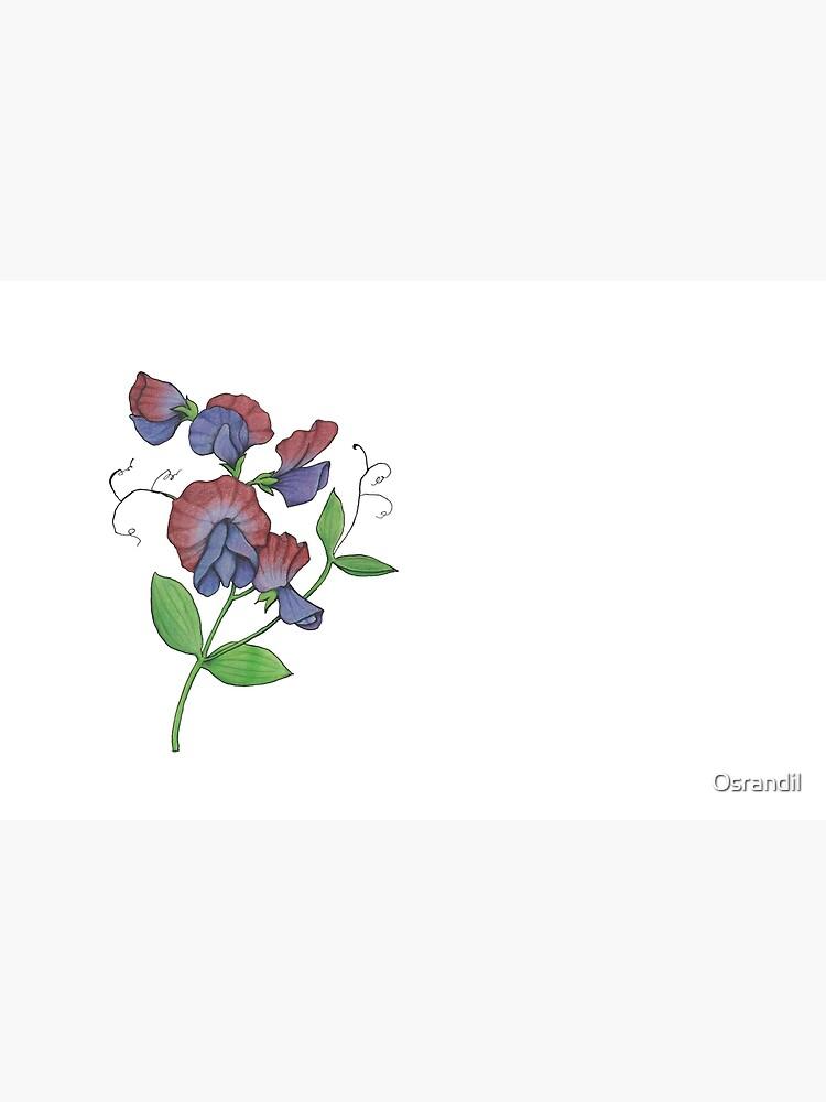 Sweetpea (Lathyrus odoratus) by Osrandil