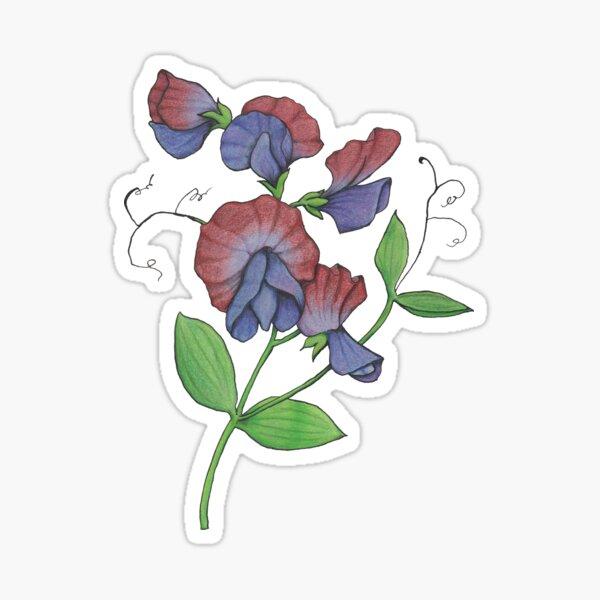 Sweetpea (Lathyrus odoratus) Sticker