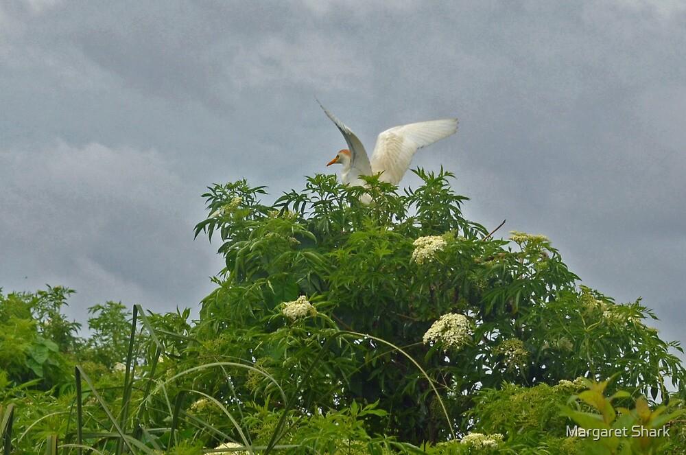 Egret Rising by Margaret Shark