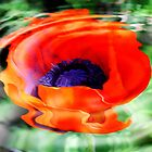 Poppy In A Spin by vette