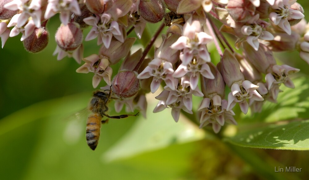 Buzzing By by Lin Taylor