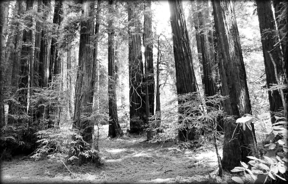 Muir Woods Surrounded~ by GraNadur