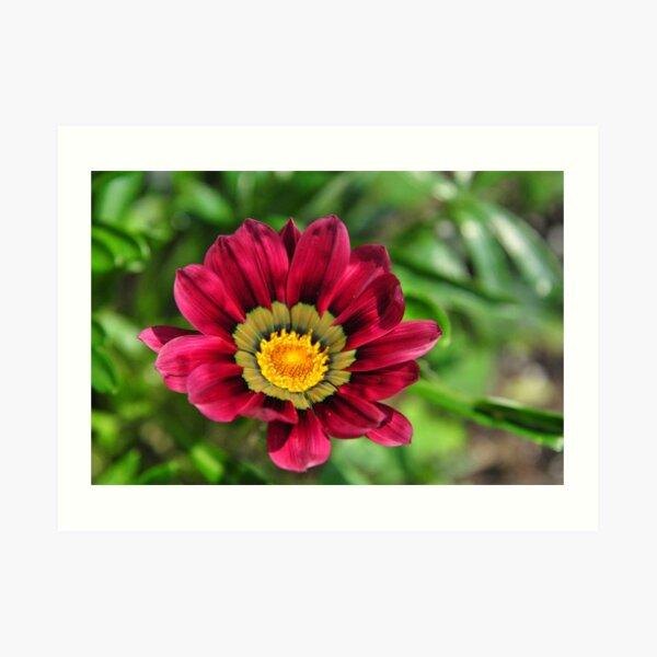 Blooming Red Flower ! Art Print