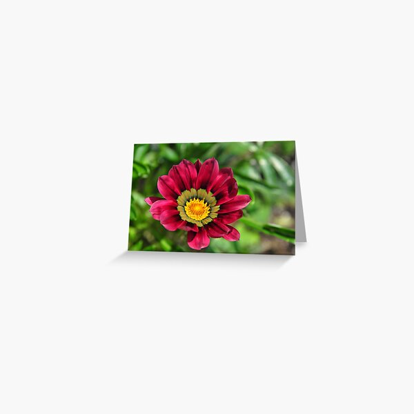 Blooming Red Flower ! Greeting Card