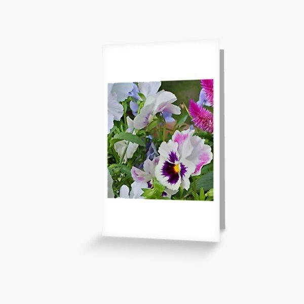 Pansies Mid Summer Greeting Card