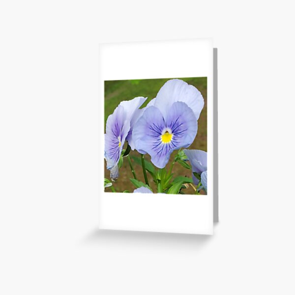 A Heart of a Pansy Flower Greeting Card