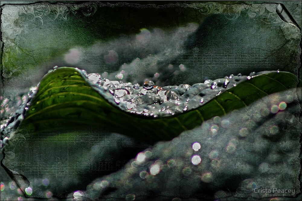 The Green Wave by Crista Peacey