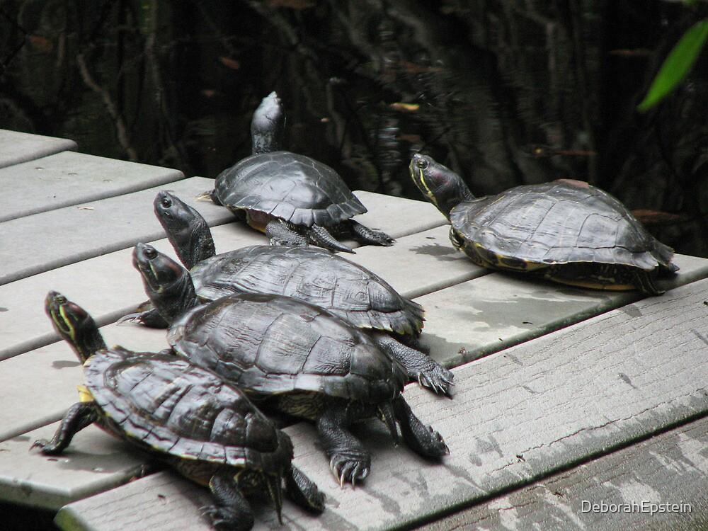 Turtles in the sun. by DeborahEpstein
