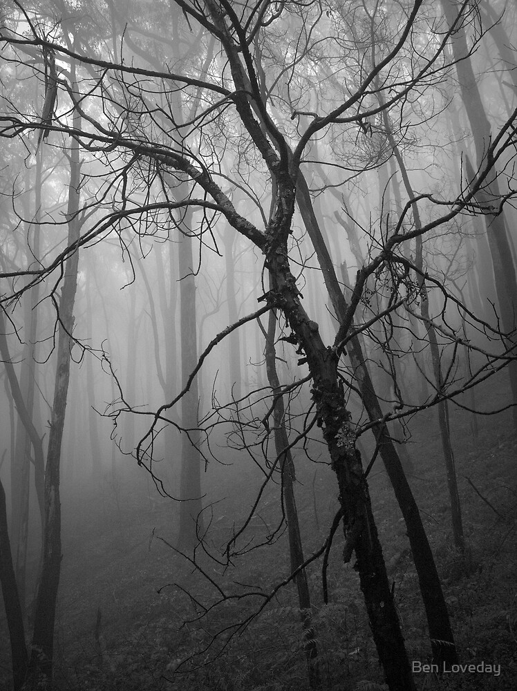Scary Tree- Yerrang Track by Ben Loveday