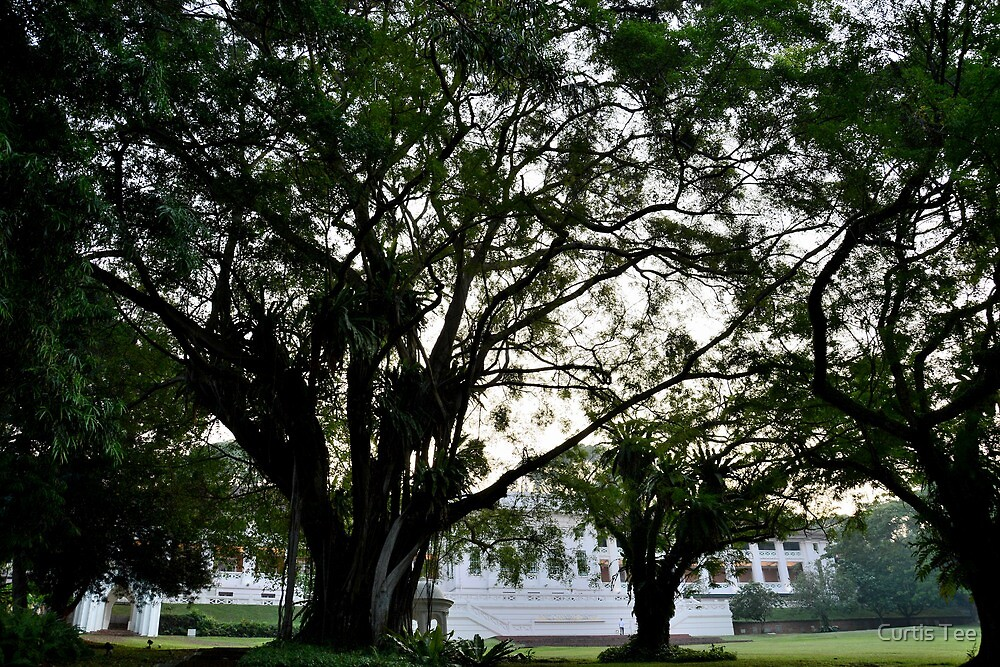 Fort Canning by Curtis Tee